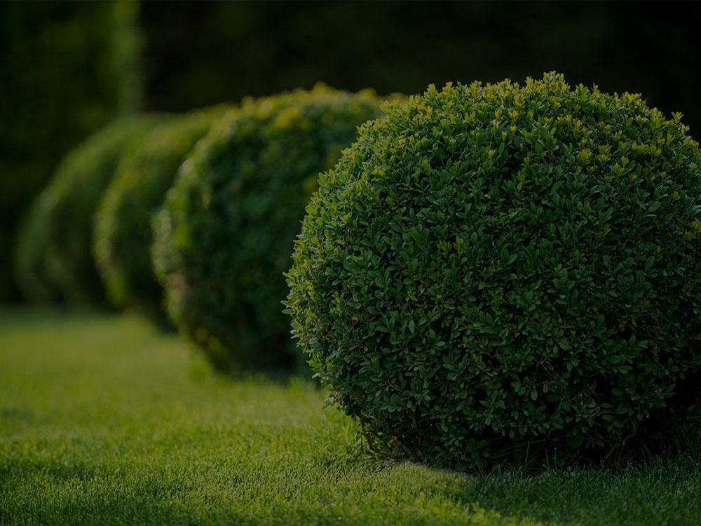 Montclair Landscaping